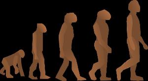 SoLoCo Evolution